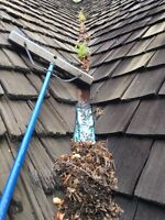 Eaves cleaning service