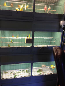 Beautiful Bird Cage Breeding System