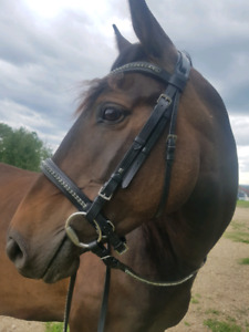 BLACK DIAMOND Bling Bridle (FULL) by Bijoux Equestrian!