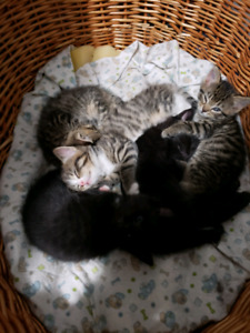 4 beautiful kittens ready to go in the new year