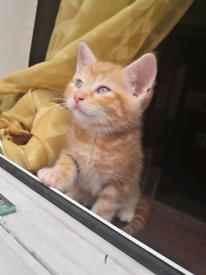 Beautiful kitten's for sale