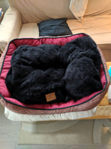 American Kennel dog bed, good condition, just laundered