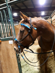 Rope Bitless bridle