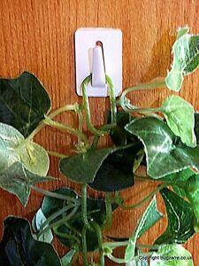 Vivarium Plant Holders Self Adhesive  X 5 .Perfect For Artificial Plants