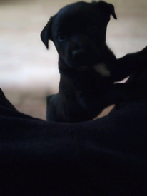 Cute puppy for sale