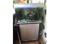 125 ltr fish tank WITH FISH AND DECOR