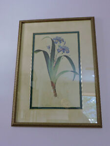 Botanical prints (4) -framed