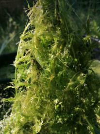 Oxygenating plants