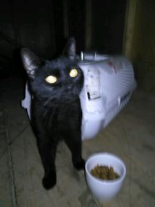 Black cat found
