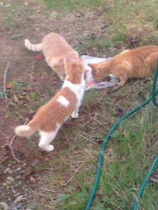 Found 3 young cats in Albro Lake area