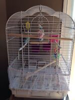 Three budgies and cage