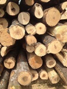 Hardwood firewood. Full cord delivered Kingston Kingston Area image 3