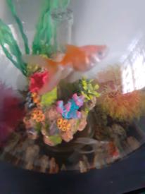30ltr bio orb and 2 fish