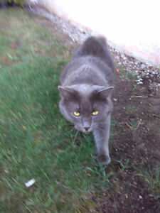 Lost cat London Ontario image 1