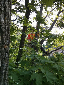 Tree Service / Arborist Work Belleville Belleville Area image 4