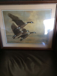 """Christopher Forrest Picture 21.6"""" x 17.6"""" Canada Geese nice sha"""