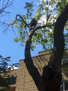 Forest City Tree Services - 20% off Summer Sale London Ontario image 2