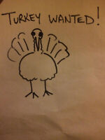 male turkey poult wanted