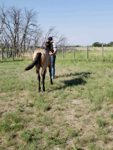 Yearling colt for sale