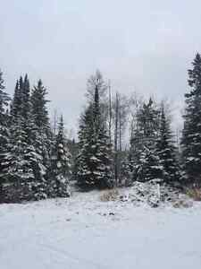 10 wooded acres in Neebing hydro, driveway