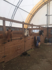 Horses for free lease /exercise