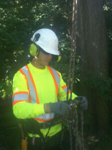 ###tree removal stump grinding PHONE 647-704-0175. TEXT.
