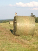 WANTED 500+ ROUND OR LARGE SQUARE HAY BALES