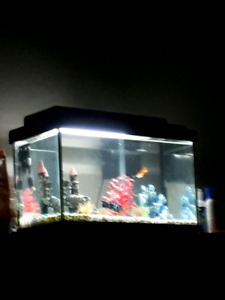 Free 10gal aquarium with fish.GONE PPU
