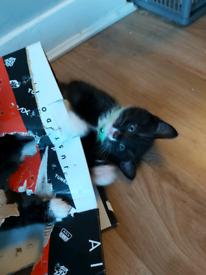 Amazing playful fluffy kittens