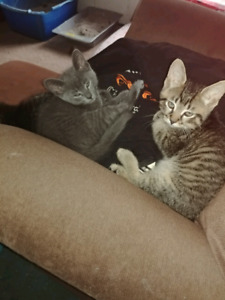 Kittens looking for a home.