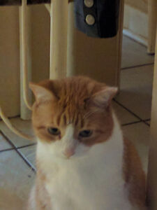 Beautiful female cat looking for a new home