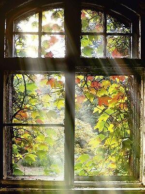 Fenster Poster (Poster oder Leinwand Bild S. Körber Architektur Fenster Türen Foto Braun B9HC)