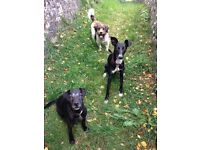 Dog walking and pet sitting offered