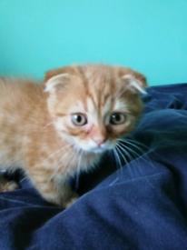 Unique pedigree kittens