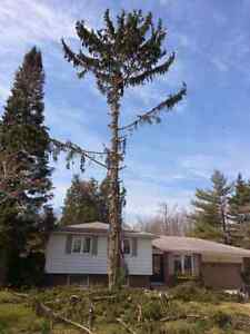 Lumbersmith Tree Removal Services Kitchener / Waterloo Kitchener Area image 8