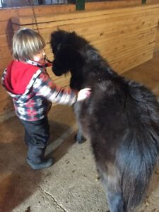 Horse care/grooming classes
