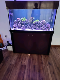 Marine fish tank and sump