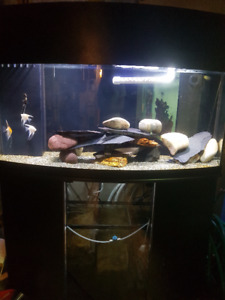 72Gal Bow Front 33Gal Sump $700obo