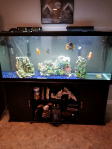 125 gallon fish tank and stand