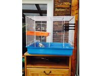 budgies and cage for sale £35