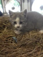 Barn kittens for sale