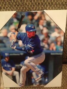 Toronto blue jays pictures