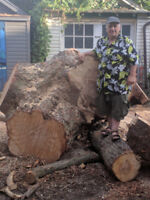 Tree Cutting, Lot Clearing, Emergency...Frank@647-447-5779