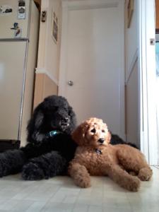 Garderie familiale pour chiens (CHEZ KENYA ET CHARLOTTE)