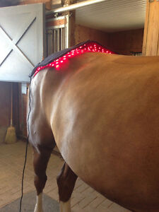 Equine Sports Massage & Light(Laser) Therapy