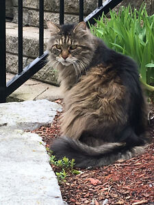 Lost cat Cobourg / Port Hope area North of Dale Road