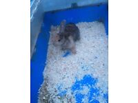 Very young and adults rabbits for sale