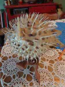 6 inch diameter spiked Blowfish on stand Belleville Belleville Area image 1