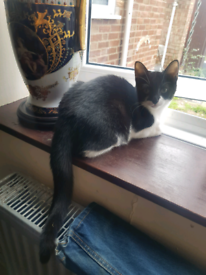 Female cat/kitten 5 months old house trained