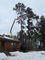 Tree Removal Is No Problem W/ Equip In Winter/Spring..